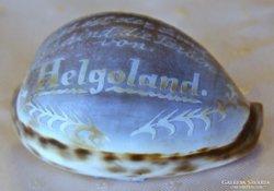Faragott csigaház von Helgoland.