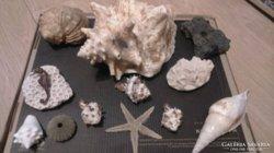 Dominikai 13 db tengeri kagylók ,csikó,sün ,homok
