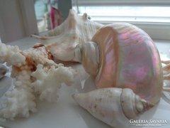Kagylók,csigák,20 db együtt !