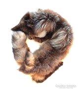 Valódi szőrme, eredeti róka gallér