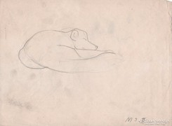 Állatkerti rajz sarki róka