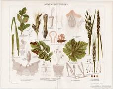 Növénybetegségek, 1896, Pallas nyomat, eredeti, antik