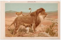 Oroszlán, 1898, Pallas színes nyomat, antik, eredeti