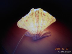 Egyedi Gyönyörű Kagyló Lámpa