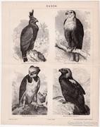 Sasok, Pallas nyomat 1898, eredeti, antik, sas, madár