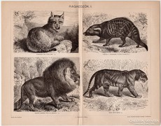 Ragadozók I., Pallas nyomat 1898, eredeti, antik, vadászat