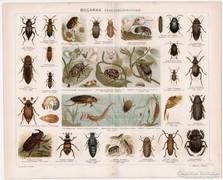 Bogarak, Pallas színes nyomat 1894, eredeti, antik