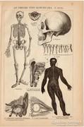 Az emberi test bonctana I., II.  nyomat 1892, eredeti, antik