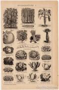 Zöldségfélék I. és II., eredeti, egyszín nyomat 1892