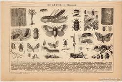 Rovarok (károsak és hasznosak), eredeti, egyszín nyomat 1892