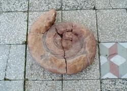 Ammonitesz, Hatalmas Ammonitesz, Óriás ritka fosszilia