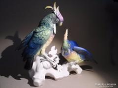 ENS jelzésű papagáj pár