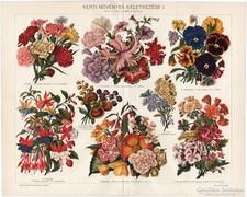 Kerti növények I.., színes nyomat 1914, szegfű, növény