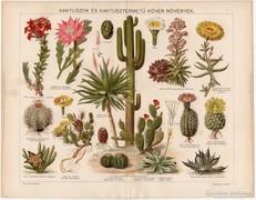 Kaktuszok, színes nyomat 1896, növény, virág, agáve, kaktusz