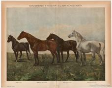 Törzsmének, színes nyomat 1898, ló, Nonius, Primás II.