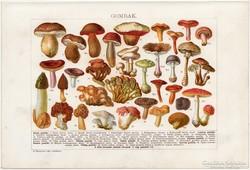 Gombák, színes nyomat 1912, gomba, csiperke, szarvasgomba