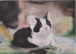 Kis cica - akvarell