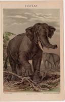 Elefánt, színes nyomat 1896, állat, eredeti, Afrika, India, Fischer L., régi