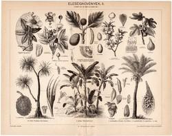 Eleségnövények II., egy színű nyomat 1896, eredeti, antik, eleség, kenyérfa, pizáng, datolya, füge