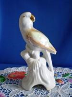 Porcelán papagáj, madár